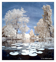 Infrared world, false colors