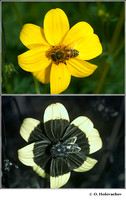 Ultraviolet diptychs of animals and plants